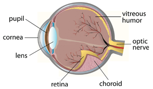cornea1