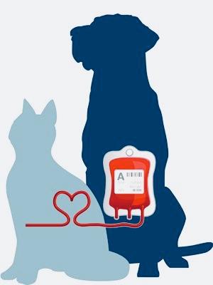 Хемолайф българска кръвна банка за  домашни  животни